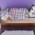5 Useful Tips to Choose a Great Cat Condo
